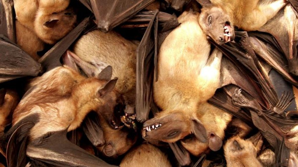 Virus likely jumped to humans from bats